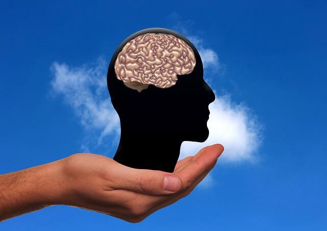 脳を手で持っている写真。
