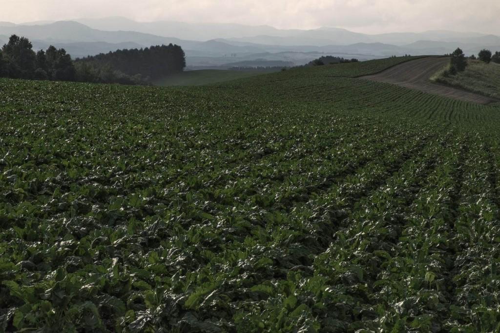 広がる畑の写真。江戸時代以降、遠州はド田舎だった