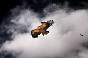 tibetan-1145932_640 (1)
