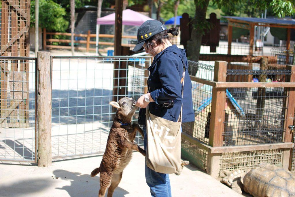 香川県しろとり動物園のヤギ